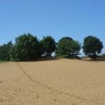 landscape shot dune 01
